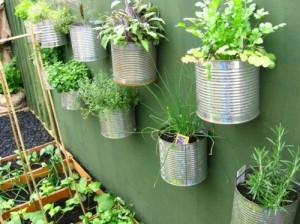herbs in cans